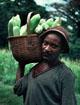 Corn farmer in Zimbabwe